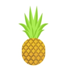 Isolated pineapple fruit on vector image