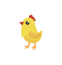 Little yellow chicken with red beak and scallop vector
