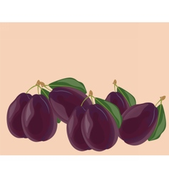 Plum fruits isolated vector image