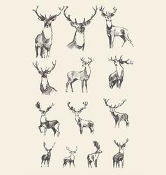 set drawn noble deers sketch vector image