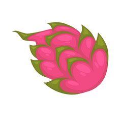 pitaya or ripe dragon fruit isolated on white vector image vector image