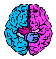 brain two halves whole brain vector image