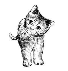 Freehand sketch of little cat kitten vector