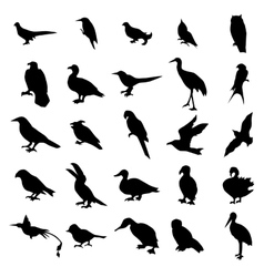 Birds silhouettes set vector image