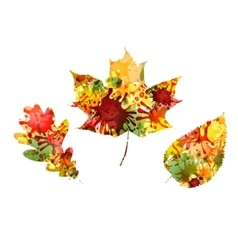 Autumn design of colorful leaves vector image vector image