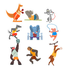 animals doing exercise kangaroo hippo wolf vector image