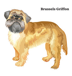 Colored decorative standing portrait of brussels vector
