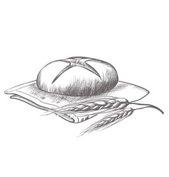 hand drawing of round bread isolated vector image
