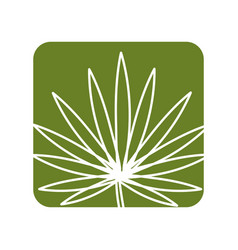 Label tropical plant with leaves in the botanic vector
