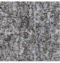 Seamless texture of a bark of a trunk of a fir vector