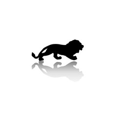 silhouette of the lion is isolated on a white vector image