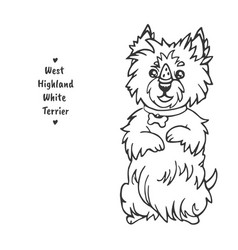 West highland white terrier sits on its hind legs vector