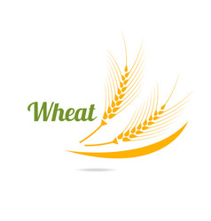 logotype template with wheat vector image vector image