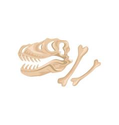 skull and bones of tyrannosaurus rex ancient vector image