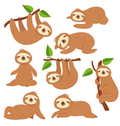 cartoon sloths cute sloth hanging on branch in vector image