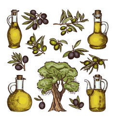 colored different olive products vector image