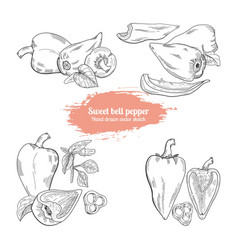 hand drawn set sweet bell pepper sketch style vector image