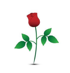 isolated rose on white background vector image