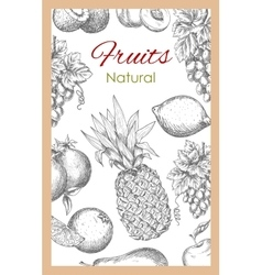 Natural fruits sketch poster vector image vector image