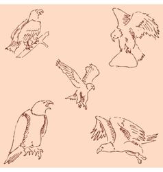 Eagles Sketch pencil Drawing by hand Vintage vector