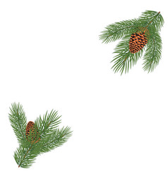 green lush spruce branch vector image