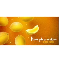 honeydew melon sweet fruits vector image