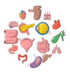 internal human organs icons set cartoon style vector image
