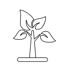 Isolated tree with leaves design vector
