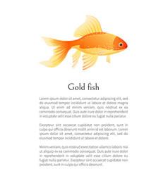 red goldfish aquarium fish isolated on white vector image