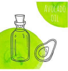 hand drawn avocado oil bottle with green vector image vector image