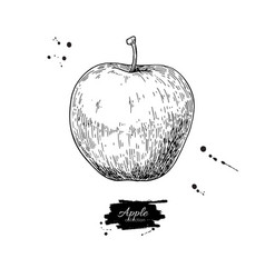 Apple drawing hand drawn isolated fruit vector