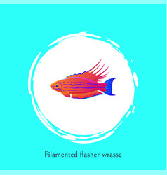 Filamented flasher wrasse ocean fish poster vector