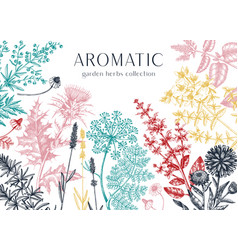 hand drawn herbal plants banner decorative vector image