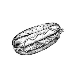 Hand drawn of delicious hot dog on white backgroun vector