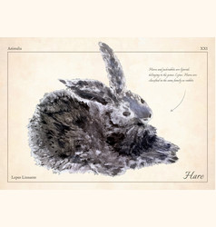 Hare rabbit isolated hare rabbit vector