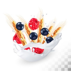 Raspberries and blueberry and wheat ear in a milk vector