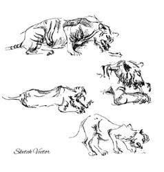 Tiger eating meatSketch vector image