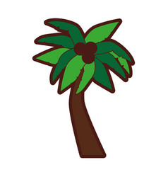Tropical tree palm with coconuts vector