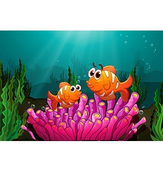 Two fishes above a pink coral vector