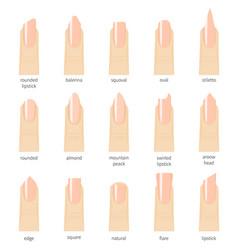 different fashion nail shapes set kinds of nails vector image vector image