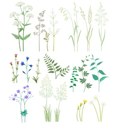 Grass and wild flowers vector