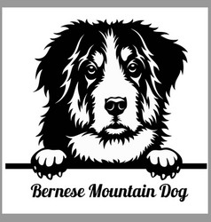 bernese mountain dog - peeking dogs - breed face vector image