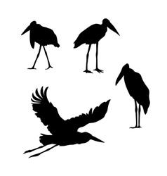 Bird marabou silhouettes vector image