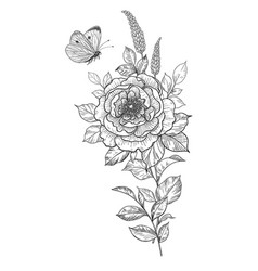 Hand drawn peony flower and flying butterfly vector