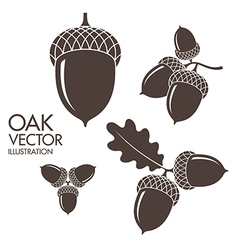 Oak Isolated acorns on white background vector image