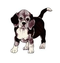 sketched hound Puppy dog hand drawn vector image