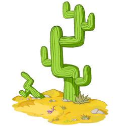 Desert cactus vector