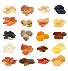 Dried fruits nuts realistic set vector