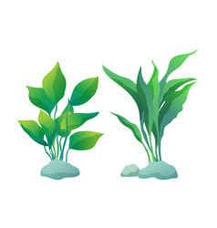 Algae plants with deltoid and wedge shaped leaves vector