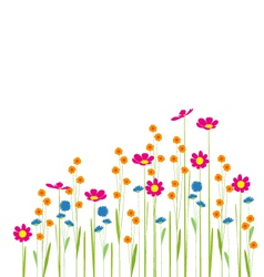 flowers in garden on a white background vector image
